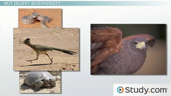Desert Ecosystems: How Biodiversity Impacts Hot and Cold Deserts
