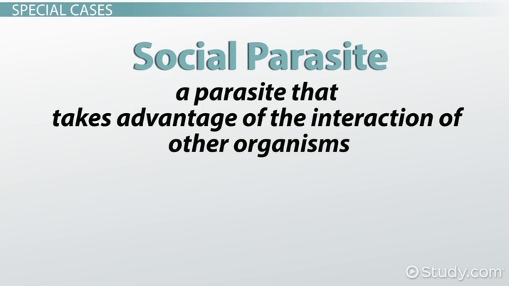 Parasitism: Examples & Definition