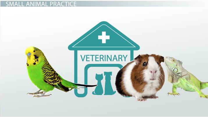 Types of Veterinary Practices - Video & Lesson Transcript