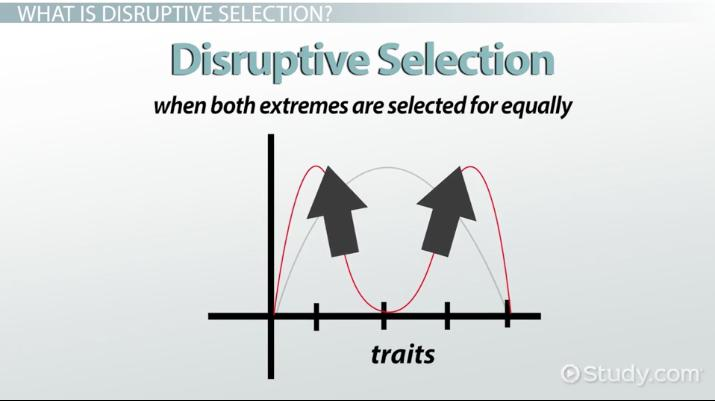 Disruptive Selection Example Definition Graph Video Lesson