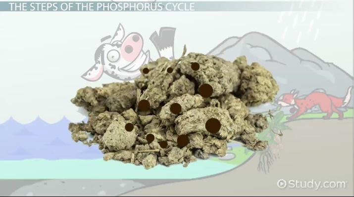 Biogeochemical Cycling And The Phosphorus Cycle Video Lesson