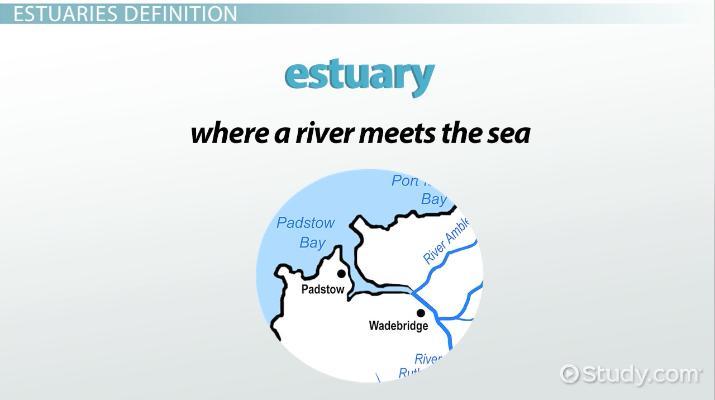 Estuaries Biome: Definition, Types & Climate - Video