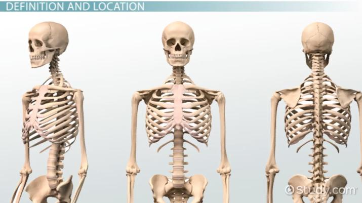 What Is A Lymph Definition Anatomy Video Lesson Transcript