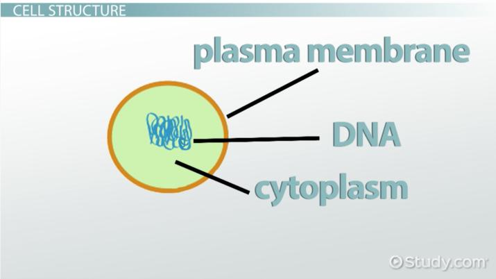 Understanding Cell Biology History Theories