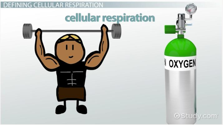 Role of Oxygen in Cellular Respiration - Video & Lesson Transcript