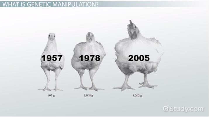 Genetic Manipulation: Definition, Pros & Cons - Video