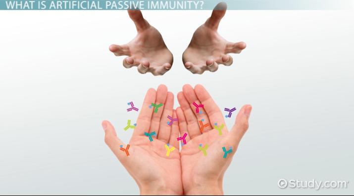 Passive Immunity Definition Examples Video Lesson Transcript