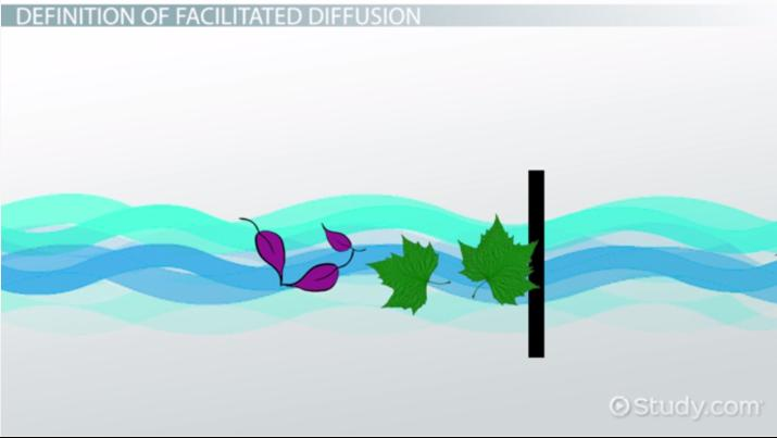 Facilitated Diffusion: Definition, Process & Examples - Video ...