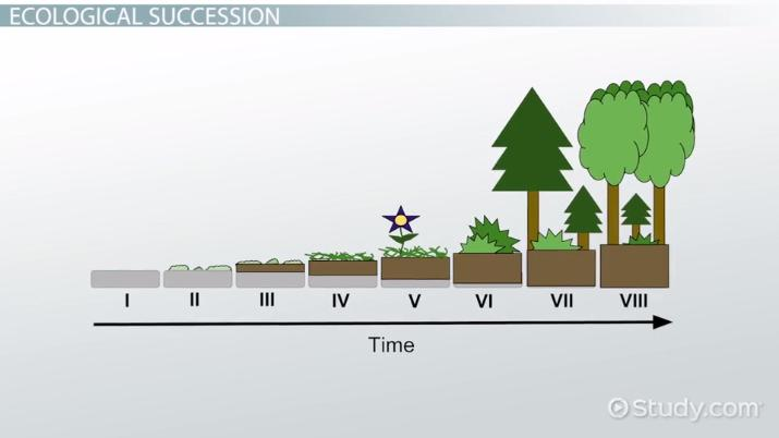 Ecological Succession Worksheet     topsimages further Pioneer  munity  Definition   Explanation   Video   Lesson also Ecological Succession Lesson Plan High Unique How to Use the additionally What Is Primary Succession    Definition   Ex les   Video   Lesson furthermore Ecology review worksheet additionally Ecological Succession  Nature's Great Grit   YouTube additionally worksheet  Ecological Succession Worksheet Middle   Hate Mysql moreover  likewise  additionally Ecological Succession Worksheet further  as well Ecological Succession Worksheet Answers Principles Of Ecology further Ecological Succession Worksheet Answers After The Ponds Are Fill on moreover  besides Ecosystem Worksheets Fantastic Best Ecosystems Images On Of Free 3rd together with ECOLOGICAL SUCCESSION inter  activity   ECOLOGICAL SUCCESSION Name. on ecological succession worksheet middle
