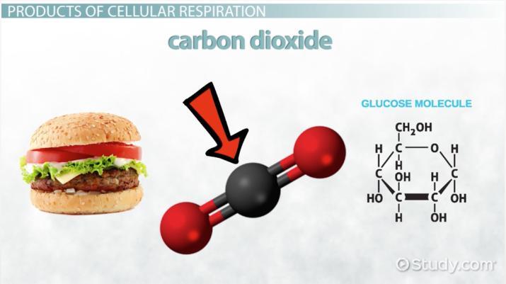 Energy Transformation Photosynthesis Vs Cellular Respiration