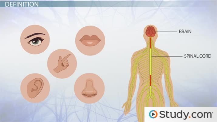 Sensory Memory Definition Examples Types Video Lesson