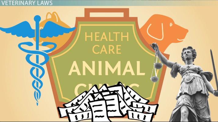 Veterinary Law & Common Law - Video & Lesson Transcript | Study com