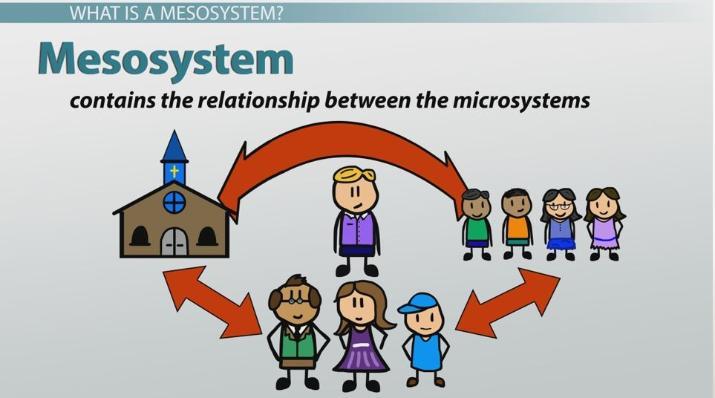 meso environment definition
