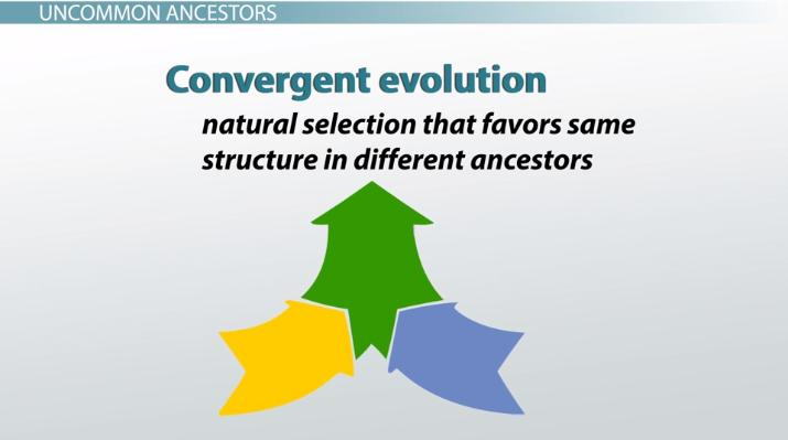 What Is Convergent Evolution Video Lesson Transcript Study