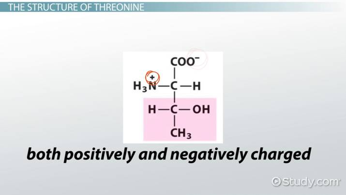 Threonine Amino Acid: Structure & Function