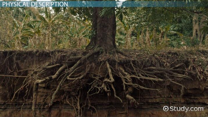 taproot  definition  u0026 examples