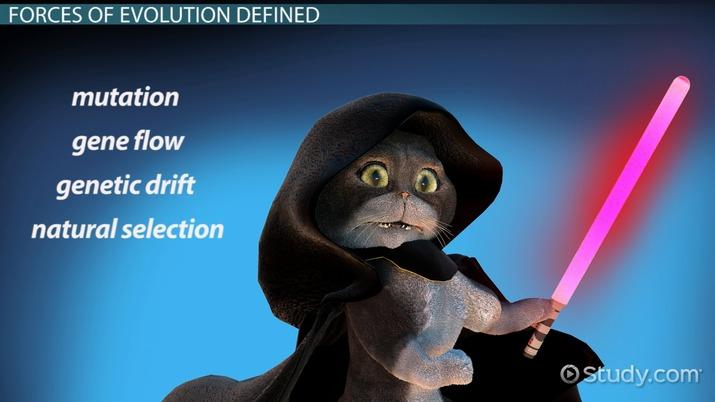 The Four Forces of Evolution - Video & Lesson Transcript
