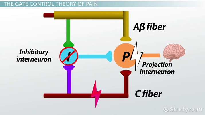 gate theory of pain example
