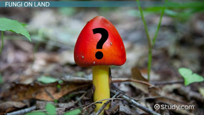 Delightful The Origin Of Fungi And Its Move To Land