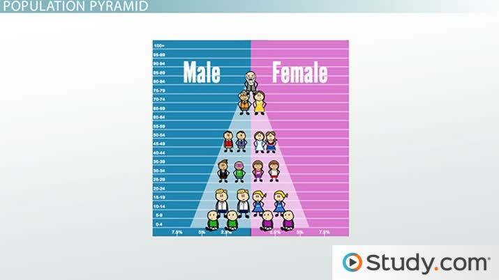The Population Pyramid