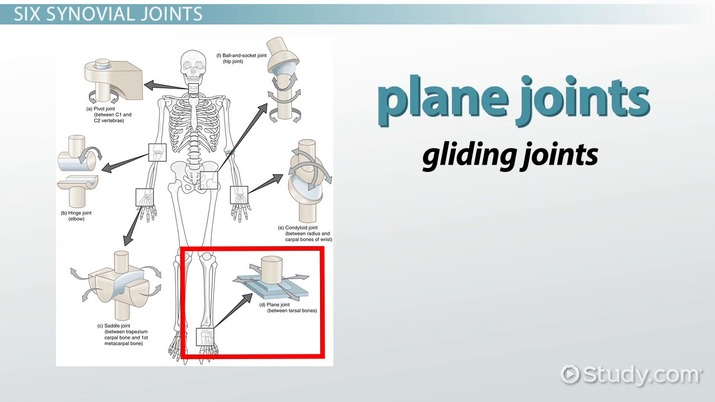 The Six Types Of Synovial Joints Examples Definition Video