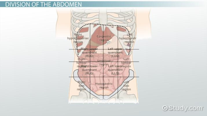The 4 abdominal quadrants regions organs video lesson video thumbnail ccuart Image collections
