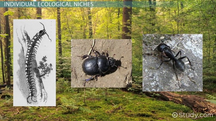 Ecological Niche: Definition & Importance - Video & Lesson