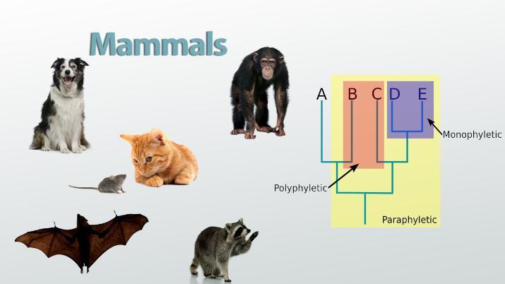 Evolutionary Relationships Definition Diagram Video Lesson