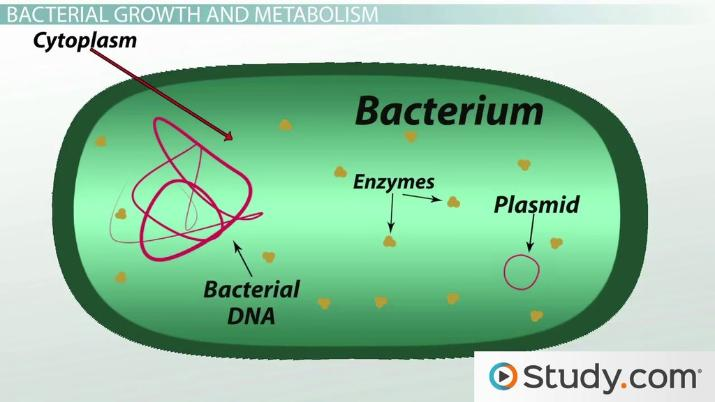 What Is Bacteria Definition Characteristics Examples Video