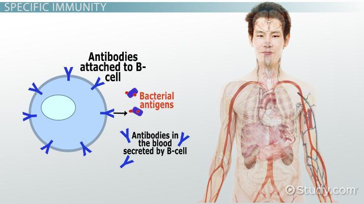 Specific Vs Non Specific Immunity Video Lesson