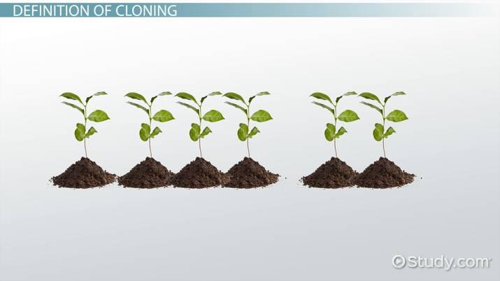 disadvantages of cloning plants