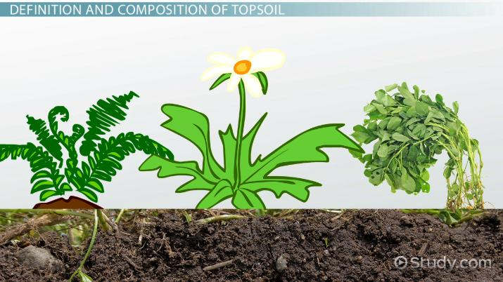 What is Topsoil? - Definition, Composition & Uses