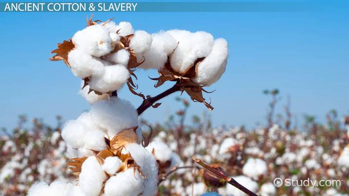 Cotton Textile Industry: Information & History - Video