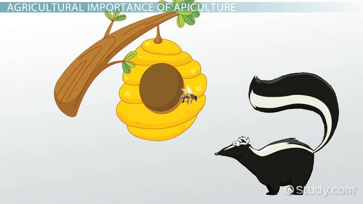 Apiculture: Definition & Importance - Video & Lesson