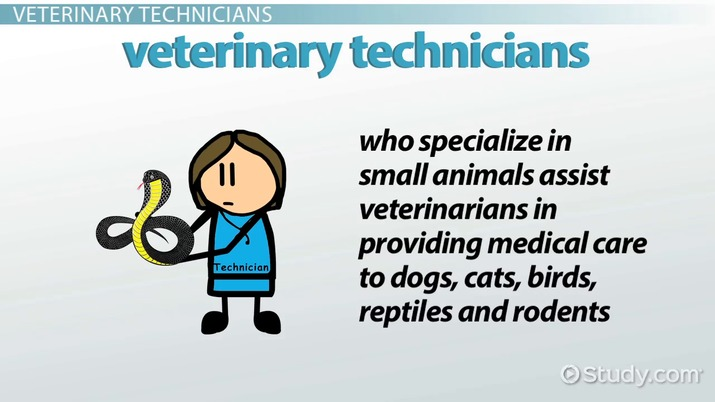 Veterinary Technician (Small Animals): Career Overview