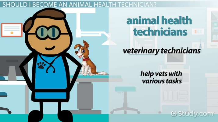 Certified Animal Health Technician Education And Career Roadmap
