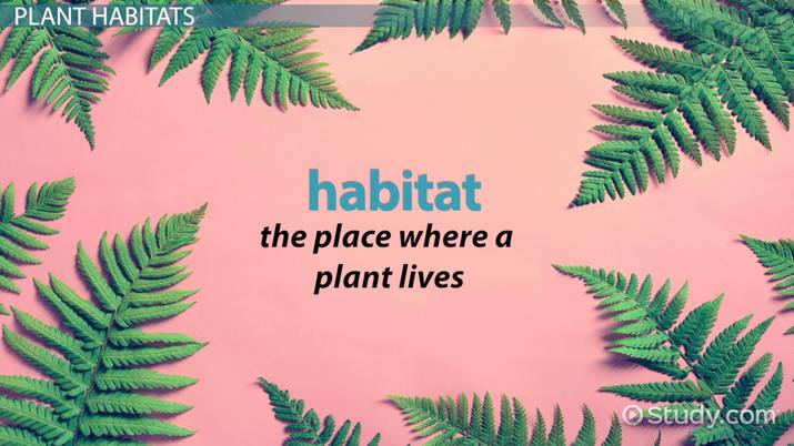 Plant Habitats Lesson for Kids - Video & Lesson Transcript