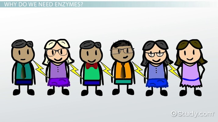 What are Enzymes? - Definition & Explanation - Video