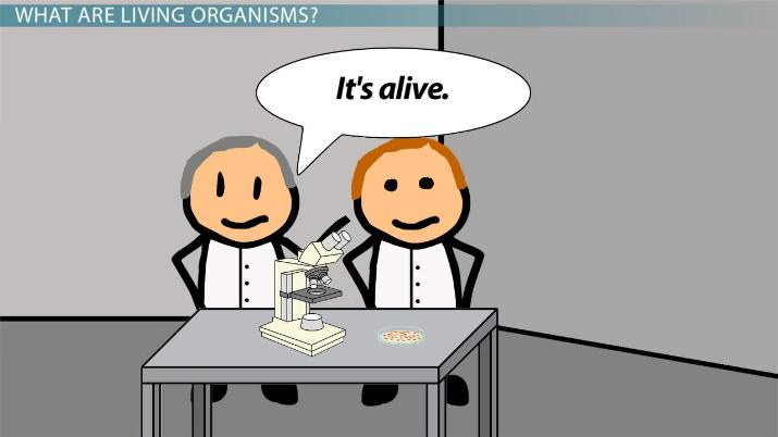 What Are Living Organisms Made Of Molecules Functions