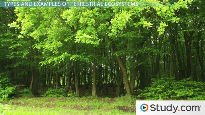What Is A Terrestrial Ecosystem