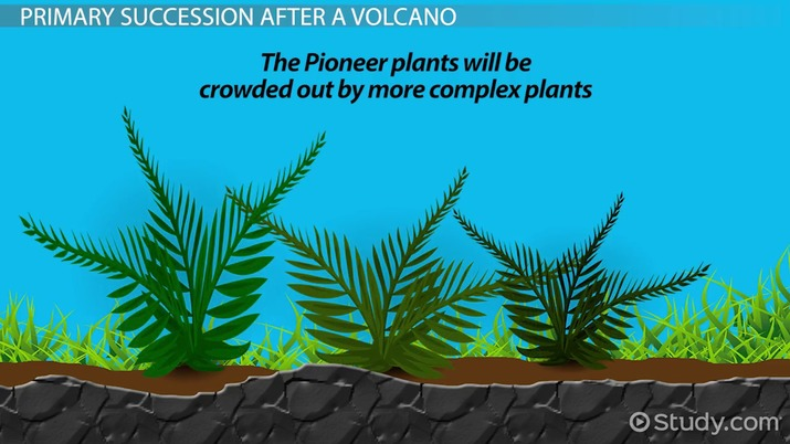 What Is Primary Succession Definition Examples Video Lesson