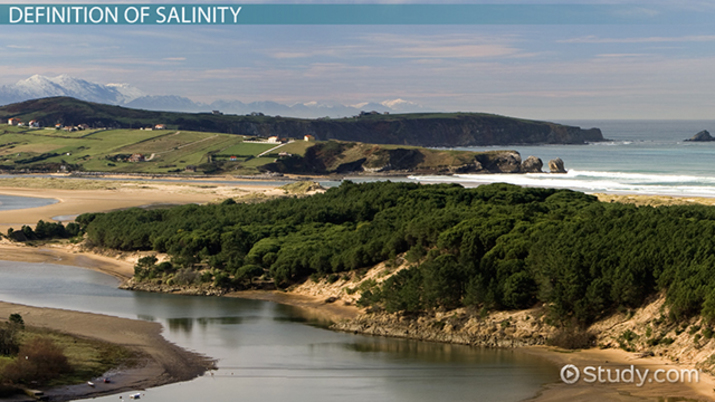 What Is Salinity? - Definition & Effects - Video & Lesson