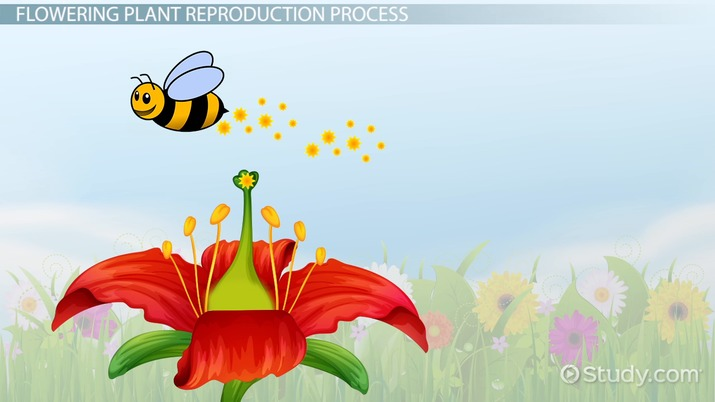 Sexual reproduction in flowering plants powerpoint