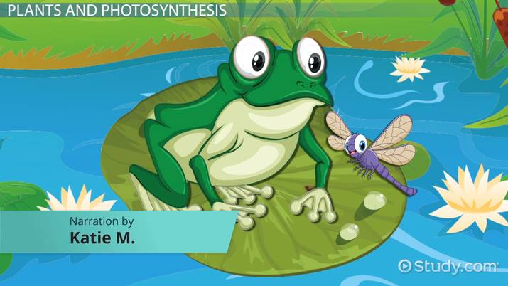 Water Lily Adaptations Lesson For Kids Video With Lesson