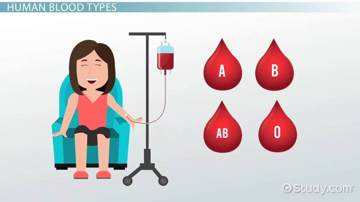Blood Type Inheritance in Humans - Video & Lesson Transcript