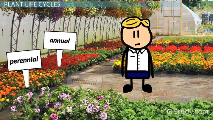 Ephemeral Plants Examples Concept Video Lesson Transcript