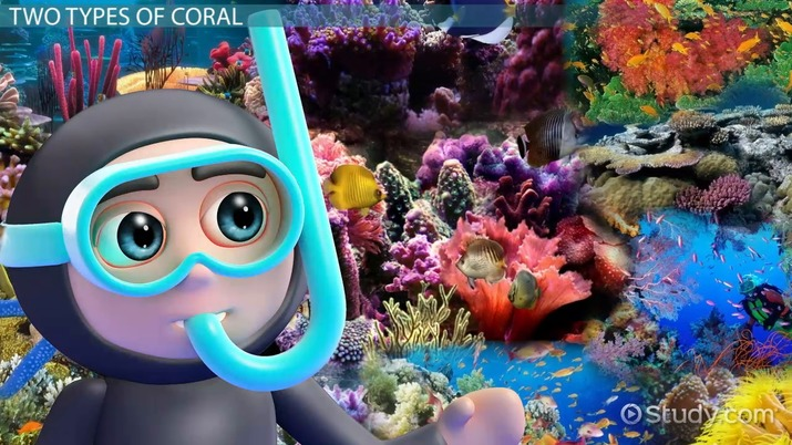 Coral Reef Lesson for Kids