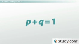 Hardy-Weinberg Equilibrium II: The Equation
