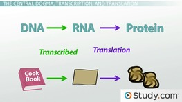 transcription biology