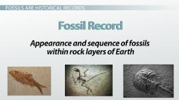 Fossil Evidence for Biological Diversity, Speciation, & Mass Extinction
